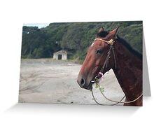 horse at te kaha Greeting Card