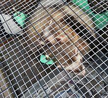 Polecats on hammock  by smithfield1234