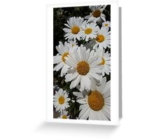Daisies everywhere  Greeting Card
