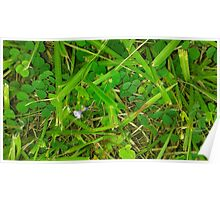 The Green Grass Poster