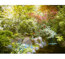 Japanese Garden_2 Photographic Print
