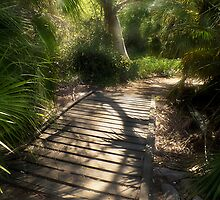 The Journey Along the Path Comes with Light & Shadows by Lucinda Walter