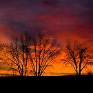 Plain Sunrise Color Palette 2 by John  Sperry