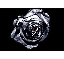 Rose Retina  Photographic Print