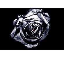 Rose Retina  Photographic Print