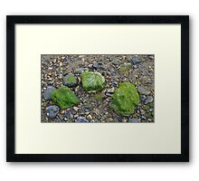 Pebbles and Seaweed Framed Print