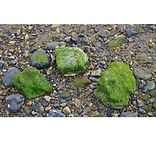 Pebbles and Seaweed Photographic Print