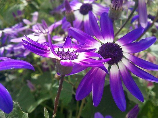 Field of Violet Flowers by EleaTiri