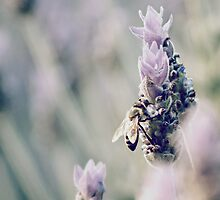 Bee On Lavender by Crystal Potter