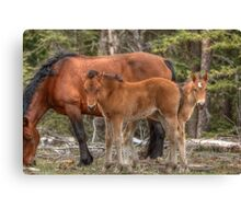 Double Foal Canvas Print