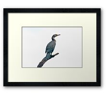 Cormorant on his Roost Framed Print