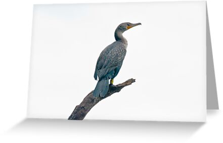 Cormorant on his Roost by Robert H Carney