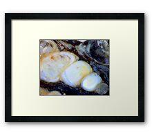 Resting Place (Turritella Limestone) Framed Print