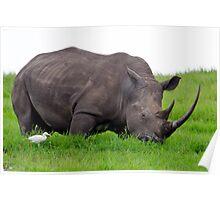African Rhinoceros Poster