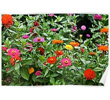bright cottage flowers Poster
