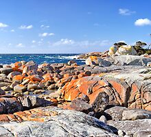Natures Palette, Bay of Fires - Tasmania - Australia by Anthony Davey