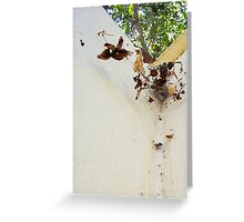 The Redback - 02 02 13 - 2 Greeting Card