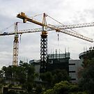 thee cranes ov Brisbane 2013 DAILY TOUR -  Day 35 by Craig Dalton