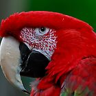 Beautiful macaw by Eti Reid