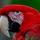 Beautiful macaw by Eti Reid