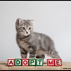 Adopt Me by Anne Young