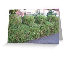 funky hedge Greeting Card