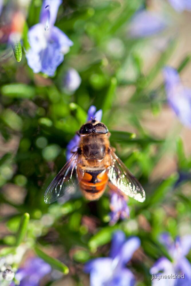 Rosemary Bee by jayneeldred