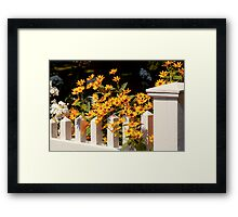 Flower - Coreopsis - The warmth of Summer Framed Print
