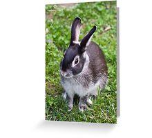 Cute Silver Marten Rabbit  Greeting Card