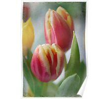 tulips . . . .  Poster