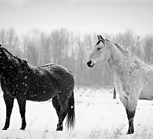 Black and white beauty by Linda Pollock