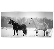 Black and white beauty Poster