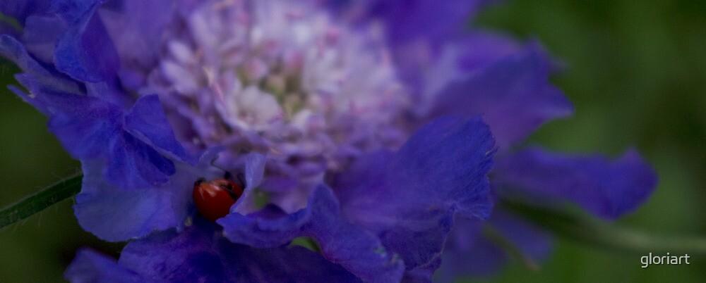 Purple Iris with Ladybug by gloriart