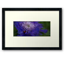 Purple Iris with Ladybug Framed Print