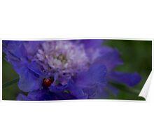 Purple Iris with Ladybug Poster