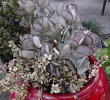 Succulent Arrangement! by seeingred13