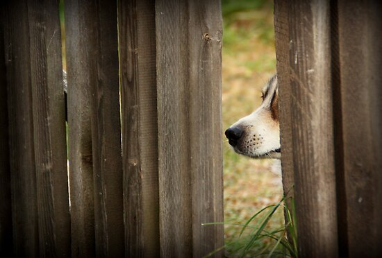 Nosy Dog by Alex Boros