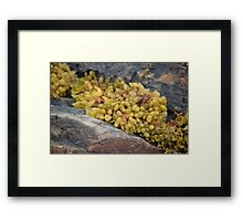 Seaweed Between Rocks Framed Print