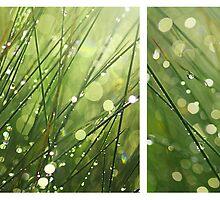 After the Rain by Irina Chuckowree