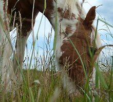 Grass for the red and white mare by elsiebarge