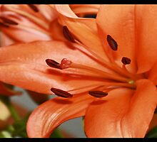 Orange Lily Tryptic by rubyrainbow