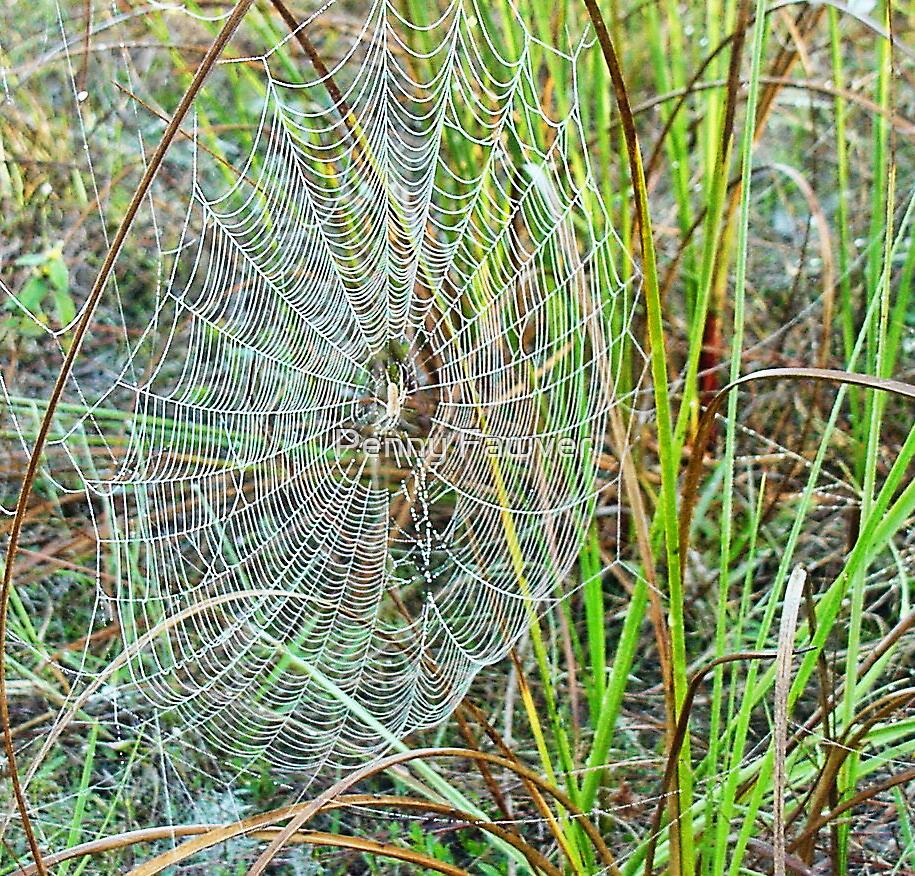 Intricate web by Penny Rinker