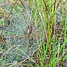 Intricate web by Penny Rinker