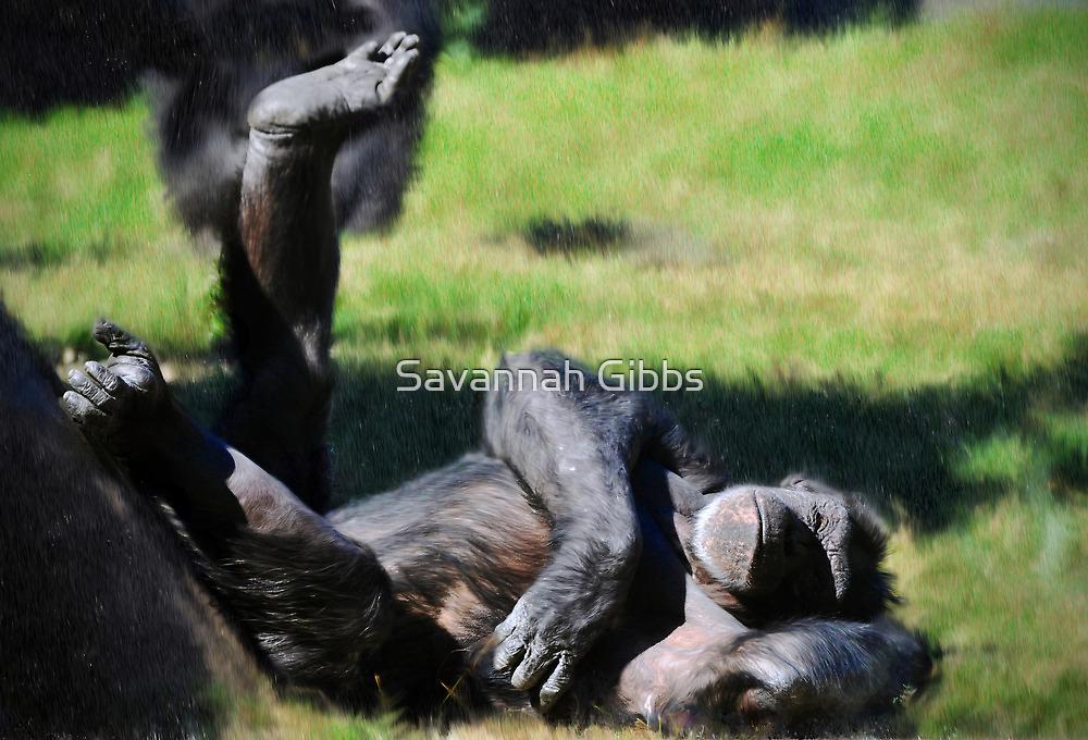 Chimp Sunbathing by Savannah Gibbs