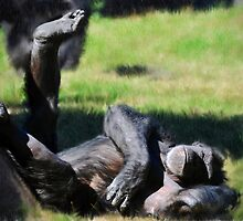 Chimp Sunbathing by venny