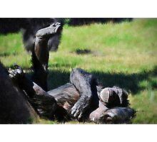 Chimp Sunbathing Photographic Print