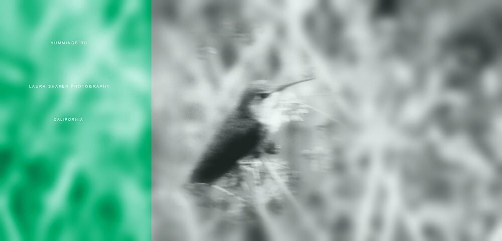 HUMMINGBIRD by Laura E  Shafer