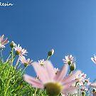 Daisy Sky by MissResin