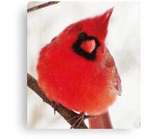 Mister Cardinal Canvas Print