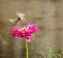 Ruby-throated hummingbird 12-2015 by Thomas Young